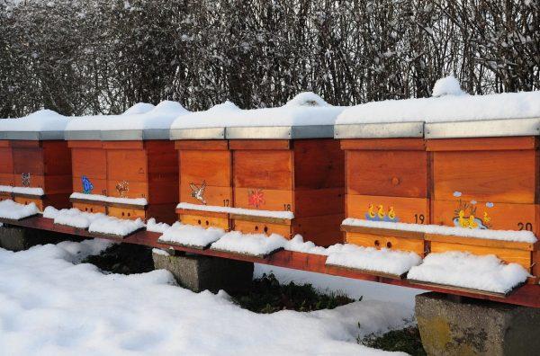 Bienen im Winter
