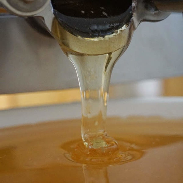 Honigverkäufer gesucht